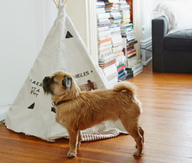 Mr. Bojangles reaps the benefit of living with artists. Hession made him this canvas teepee and many colourful costumes.