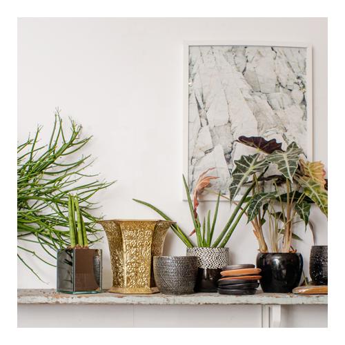 DL-0616-FloralShops-Dynasty-sq2