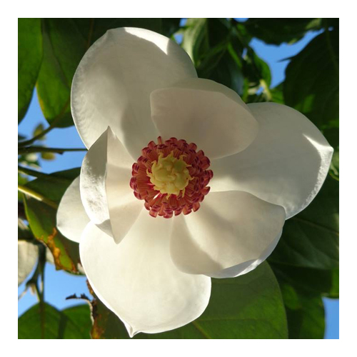 DL-0616-FloralShops-PlantWorld-sq